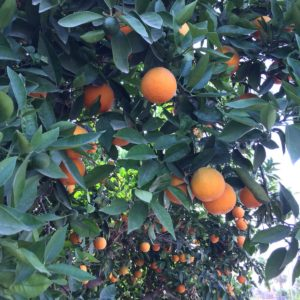 Naranja de mesa Caja 15 kg