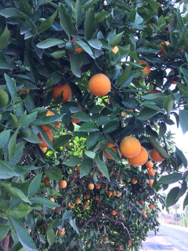 Naranja de mesa Caja 10 kg 1