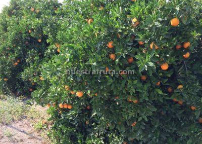 finca-nuestra-fruta-2019-001