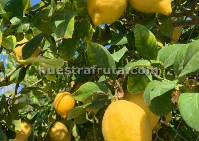 finca-nuestra-fruta-2019-011