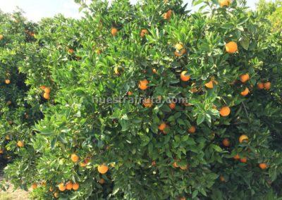 finca-nuestra-fruta-2019-020