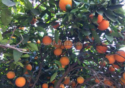 finca-nuestra-fruta-2019-043