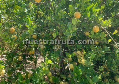 finca-nuestra-fruta-2019-046